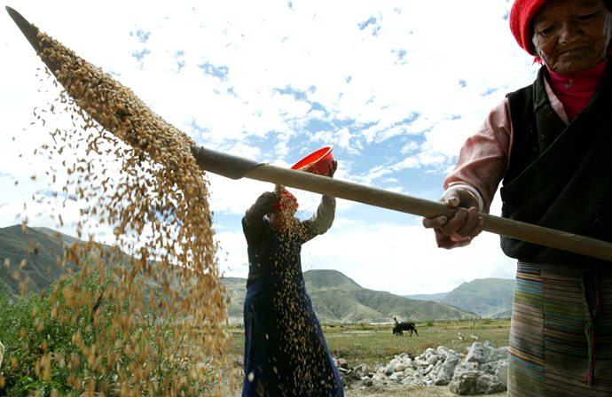 Tibetan women thresh barley in front of their house on the outskirts of Tsedang Town, Shannan Prefecture, in Tibet. (Photo courtesy: Reuters)