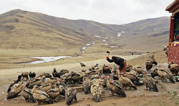 Sky burial, the Tibetan tradition of disposing of the dead by feeding it to vultures. (Photo courtesy: avaxnews.net/Getty Image)