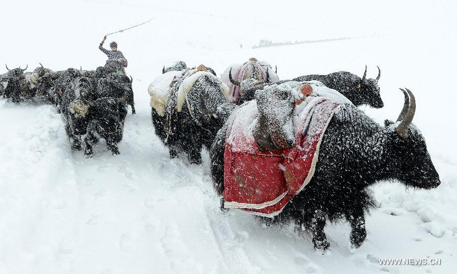 Heavy snowfall has killed livestock and stranded people on a highway in Purang. (Photo courtesy: Xinhua/Purbu Zhaxi)