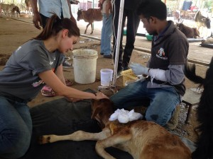 Bollywood star Anushka Sharma visits Animal Aid at Udaipur, India. (Photo courtesy: Animal Aid Unlimited/Facebook)
