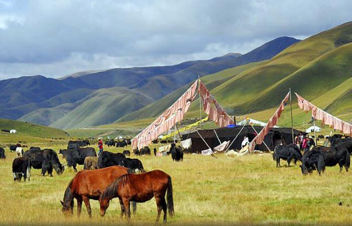 Farmers Only Reviews >> Tibetan nomads made to pay for forced relocation homes, denied promised assistance | Tibetan Review